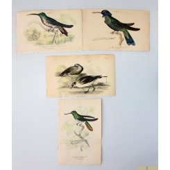 LOT OF 4 BIRDS PRINTS HAND COLORED NATURALIST'S LIBRARY 1838.