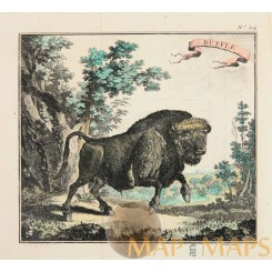 Buffle Bison Original antique copper engraving by Bellin 1746