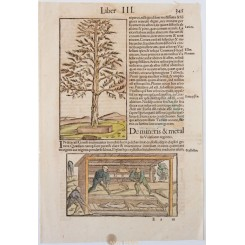 PINE GUM WORKERS COLOPHONY ANTIQUE PEINT BY SEB. MUNSTER 1550