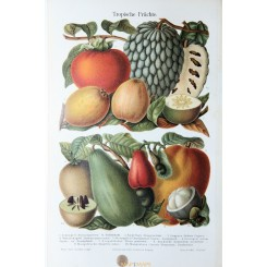 Antique Old print Tropical fruits. Meyer