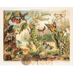 Insects, Antique Nature Print Entomology 1905