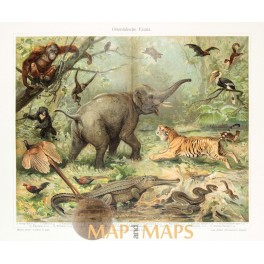 Animals, Antique Nature Print of Oriental fauna. 1905