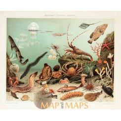 Saltwater Aquarium fishes Antique Nature Print 1905