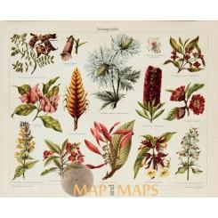 Wild Plants Antique Nature Print 1905