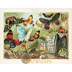 Butterflies Insects Antique Nature Print 1905