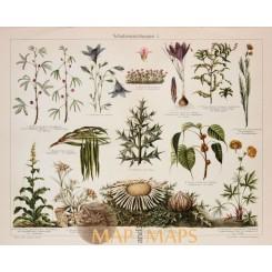 Plant Protection Antique Botanical Print. 1905