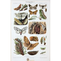 Forest Insects I, Antique Old Print eco system. 1905