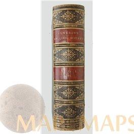 English Botany Volume IV. Boswell Sowerby 1865