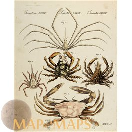 Crabs, old antique print, Bertuchs 1800.